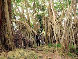 Banyan trees, Tuwi, West Savu