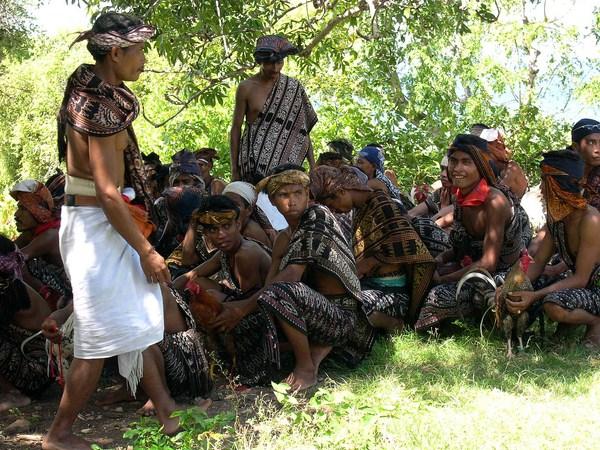 Kaum laki-laki menyiapkan upacara sambung ayam ritual di Liae